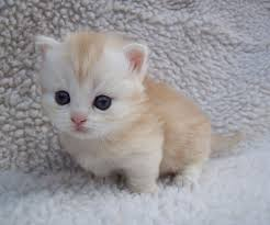 cute baby cats for sale. Fine Cute On Cute Baby Cats For Sale I