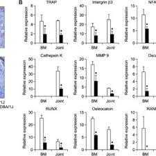 Inhibition Of Osteoclastogenesis In Interleukin Il 17 Knockout