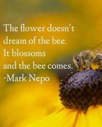 Secret Life Of Bees Quotes Best 48 Best Herbal Wisdom Images On Pinterest In 48 Herbal Medicine