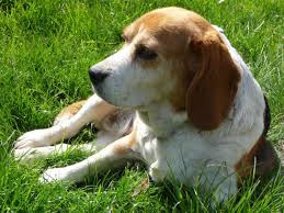 best hunting dog breeds photo dog breeds puppies best hunting