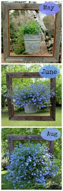 Garden Design Spray Paint A Framed Lobelia Like The Framed Hanging Basket Idea Use