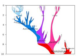 Missing Link Human Evolution Wikipedia