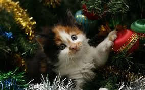 Kitten Hiding In The Christmas Tree - WallDevil