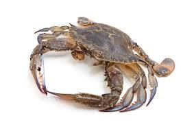 Crab Species Chart Blue Swimmer Crab Fish Identification Information
