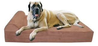 best pain relief for dogs arthritis