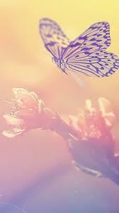 Iphone 6 Butterfly Wallpaper 3d
