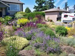 drought resistant garden. Front Yard Drought Tolerant Landscaping Ideas Beautiful Flowers For Enchanting Landscape Design With Unbelievable Picture 56 Resistant Garden D