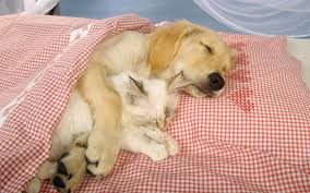 Image result for free wall paper images- cat sleeping