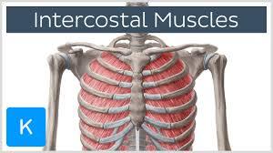 intercostal muscle pain left side