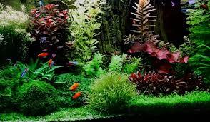 6 Best Aquarium Plant Fertilizer Available Today 2019