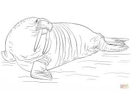 Small Picture Walrus coloring page Free Printable Coloring Pages