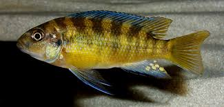 pic of fish. Modren Pic How To Get Good Pictures Of Uncooperative Fish For Pic Of Fish F
