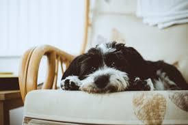 animal friendly furniture. Pet Friendly Patio Furniture Animal G