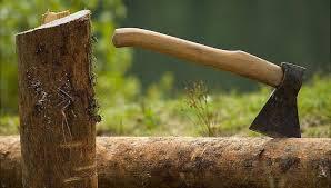 За вчинення суспільно-небезпечного діяння у вигляді незаконної порубки лісу особу ізольовано від суспільства