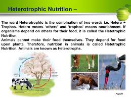 Nutrition In Plants Class Vii Ncert Based