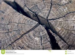 Cold Light Photography Weathered Torn Wooden Block In Cold Light Mood Stock Photo