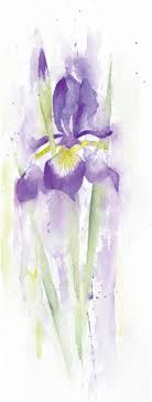 the finished painting spring iris see left watercolour on 140lb rough paper 33x13cm