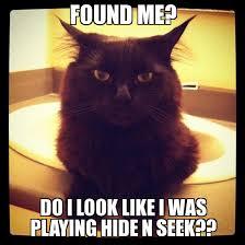 unimpressed cat - WeKnowMemes Generator via Relatably.com