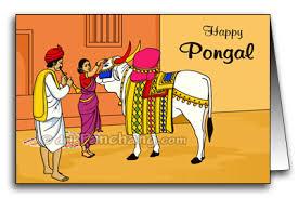 mattu pongal date for ujjain madhya pradesh mattu pongal