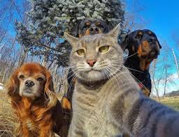 """alert! Cats and dogs tend to change their temperament in spring, pets may become """"little devil"""" 