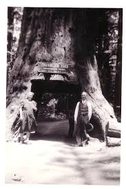 1941 tourists in redwood country update