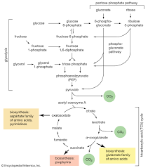 Nature Chart X And Y Carbohydrate Definition Classification Examples