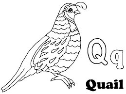 Small Picture quail alphabet q is for coloring page 236633 Quail Coloring