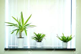 decorative plants for office. Decorative Plants For Office Window Decoration Stock Photo 13239084: Full Size