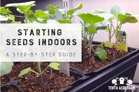 starting seeds indoors a step by step