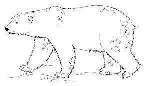 Disegni Da Colorare Disegni Da Colorare Orso Polare Stampabile