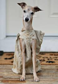 dobby costume for dog image information