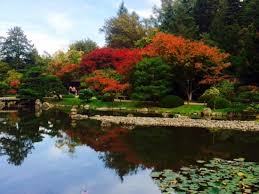 seattle anese garden 2019 all you need to know before you go with photos tripadvisor