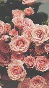 Iphone Tumblr Rose Wallpaper Hd - Rehare