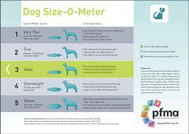 Healthy Dog Weight Chart Www Bedowntowndaytona Com