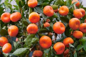 Resultado de imagem para fruto