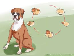 image led artificially inseminate a dog step 7