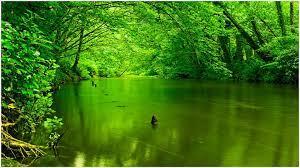 Hd Green Nature Wallpaper - Green ...