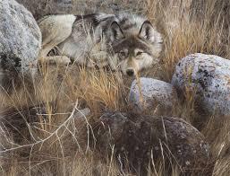 carl brenders wildlife paintings one to one grey wolf