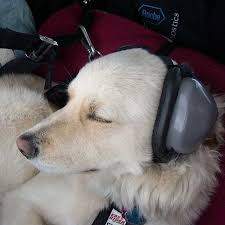 Mutt Muffs Hearing Protection For Dogs Puppy Stuff Dogs