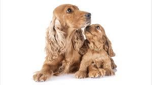 <b>Canine Maternal</b> Behavior | Ethology Institute | Roger Abrantes ...