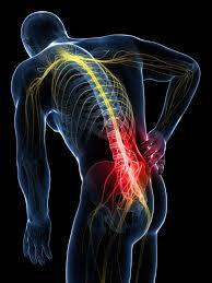 vertebral dorsal