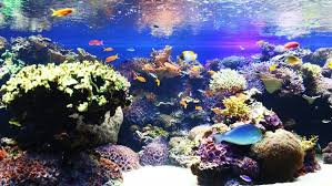 Image result for professional equipment for aquarium cleaning