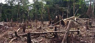 Illegal Logging Save The Rainforest Rainforest Foundation Us
