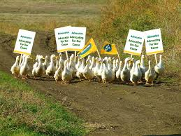 advocacy essay essay on digital ssc cgl tier iii palliative care  advocacy ducks if it looks like a duck walks like a duck and quacks like a