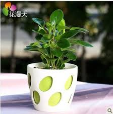 small office plant. Plants For Office Desk | Crafts Home Regarding Small Plant P