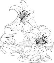 Small Picture Free Printable Coloring Pages of flowers and vines Lily flower