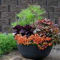 container garden design. Simple Garden Silver And Chartreuse Foliage Also Work As Color Elements To Harmonize With  Flower Color Looks Great Pink Other Soft Colors  On Container Garden Design