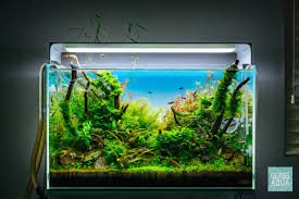 Onf Flat One Light Ada 60p Planted Aquarium Tank Onf Flat One Led Light Glass