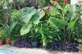 Garden Waterfall Plant IdeasPlant Ideas For Backyard