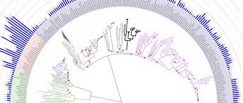 Itol Interactive Tree Of Life